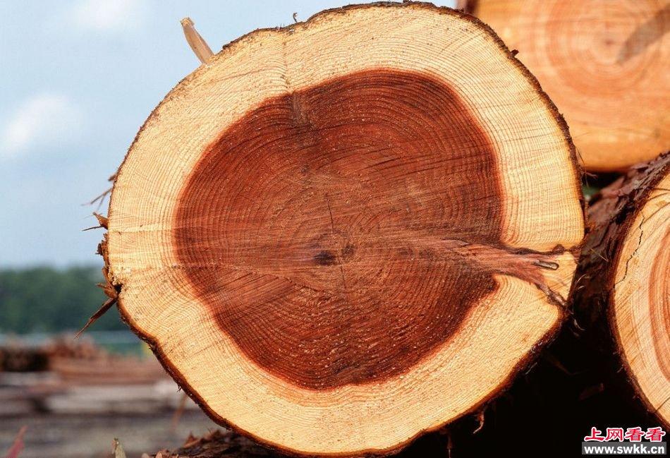 树的年轮的形成 原来藏着天大的秘密