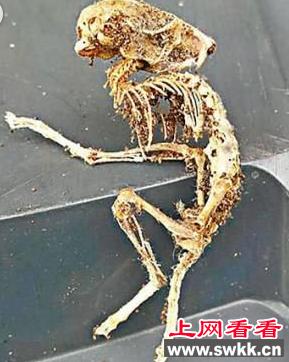 最新外星人ufo事件 男子发现疑似外星人骸骨