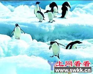 揭密南极洲十大世界之最 最寒冷之极
