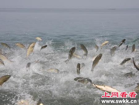 克孜尔水库放生两万尾新疆大头鱼