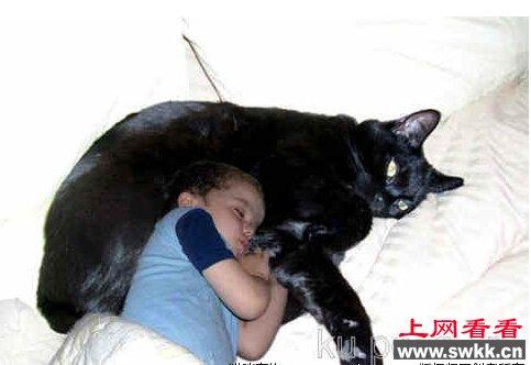 揭秘:世界上最大的猫726斤